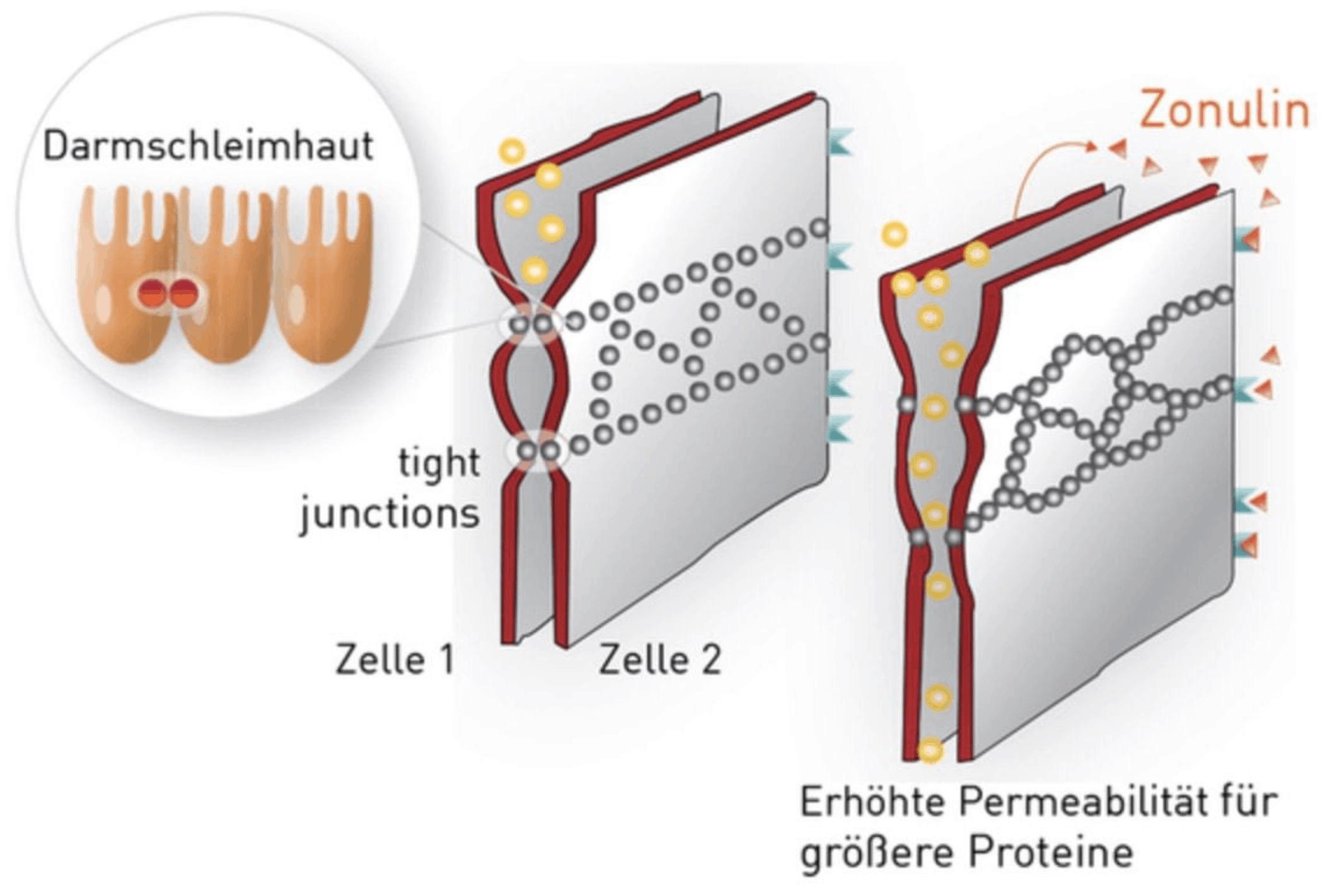 Zahnarzt in St.Gallen Zahnärztliche Materialien