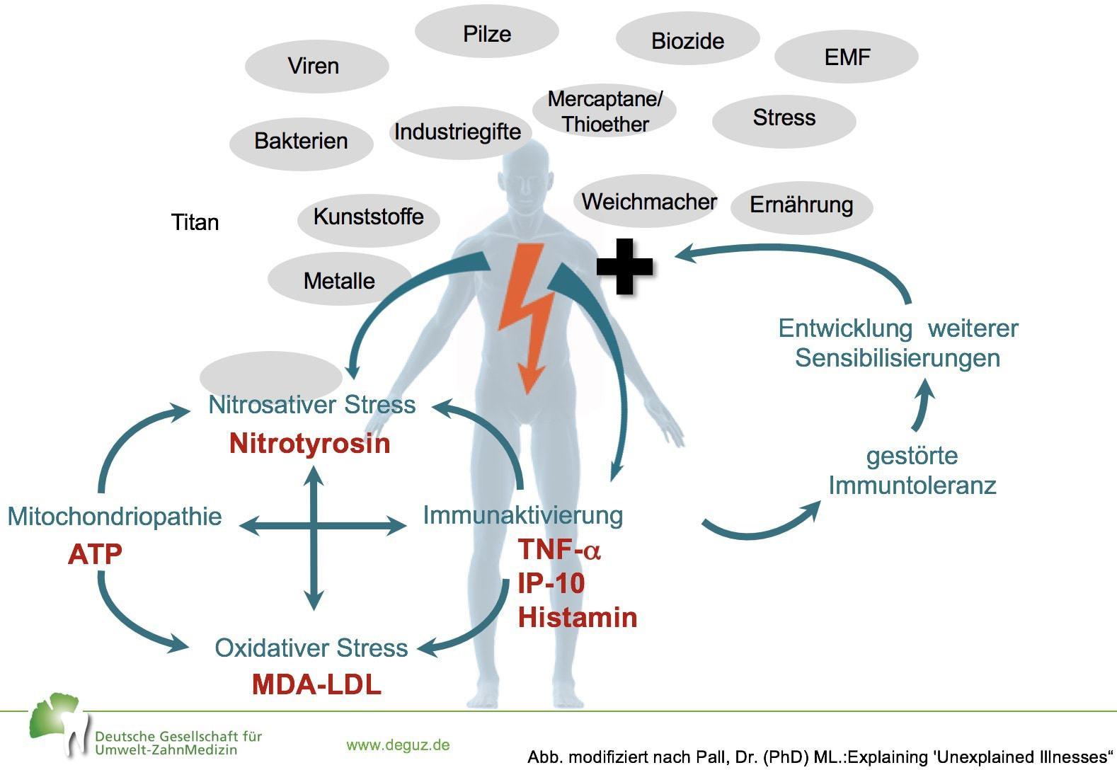 Ursachen chronischer Erkrankungen, Abbildung modifiziert nach Pall